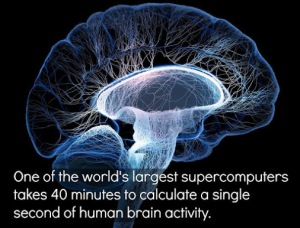 Brain in 40 Minutes